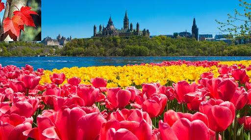 Giới thiệu đất nước - con người Canada