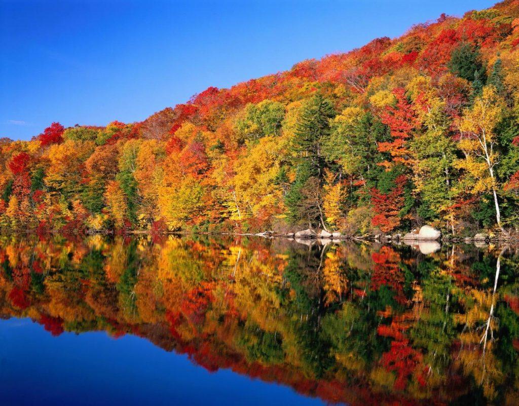 Lá phong - Vẻ đẹp bất tận cho mùa thu Canada