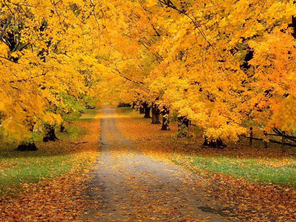 Mùa thu ở Canada